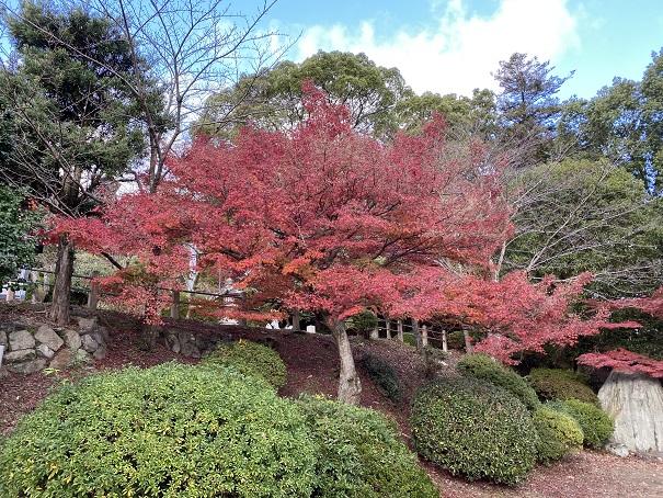 琴陵宥常銅像付近の紅葉