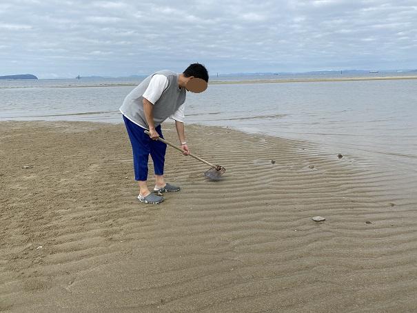 有明浜で鍬でマテ貝を取る