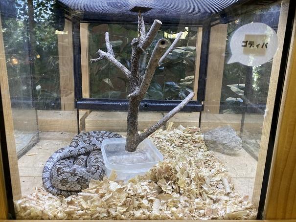 しろとり動物園 蛇2