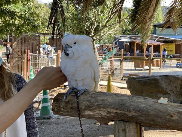 しろとり動物園 白いオウム