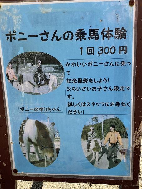 しろとり動物園 ポニーの乗馬体験