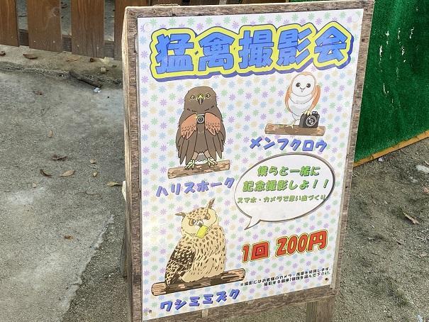しろとり動物園 猛禽類撮影会