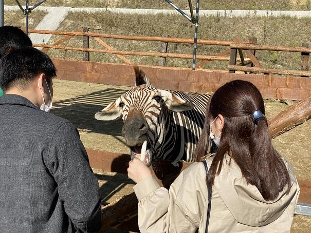しろとり動物園 シマウマ