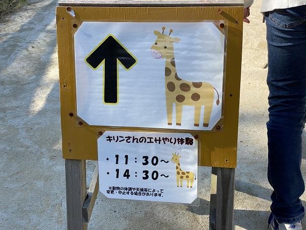 しろとり動物園 キリンのえさやり