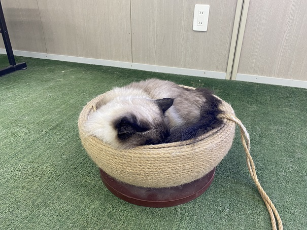 しろとり動物園 猫
