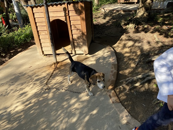 しろとり動物園 犬1
