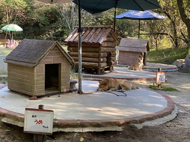 しろとり動物園 犬2