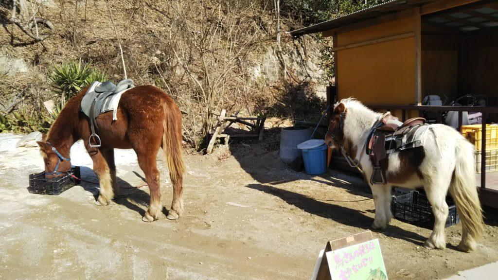 しろとり動物園乗馬体験馬