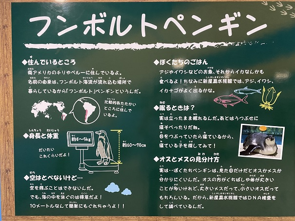 新屋島水族館 フンボルトペンギン