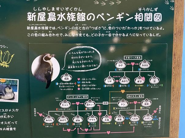 新屋島水族館 ペンギン相関図
