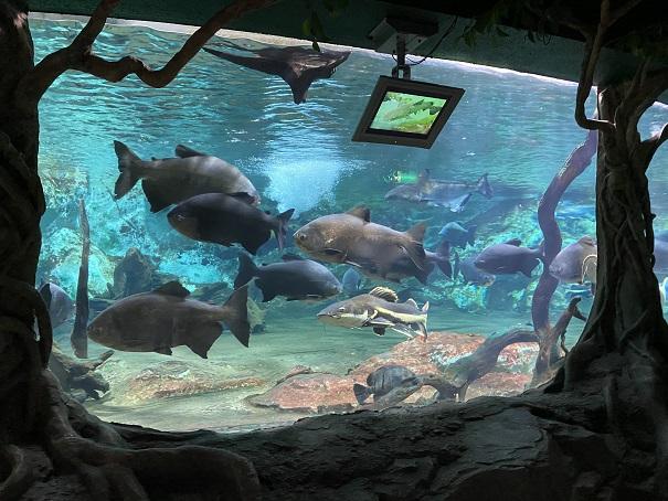 新屋島水族館 ジャングル大水槽