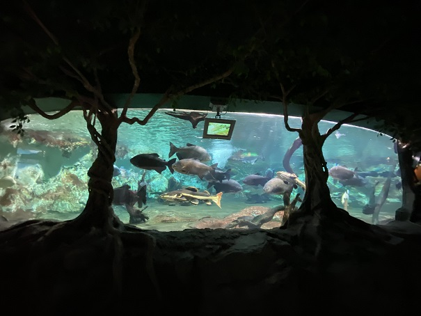 新屋島水族館 ジャングルの大型淡水魚