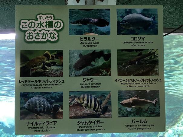 新屋島水族館 ジャングルの水槽の魚