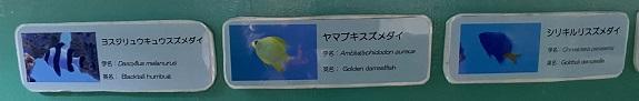 新屋島水族館 ドーム水槽の魚1