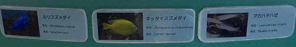 新屋島水族館 ドーム水槽の魚2