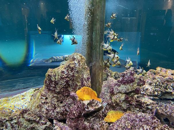 新屋島水族館 熱帯の魚