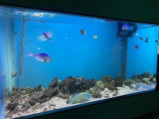 新屋島水族館 熱帯の魚の水槽