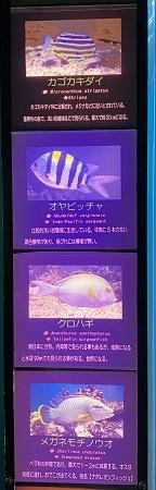 新屋島水族館 熱帯大き目の魚1
