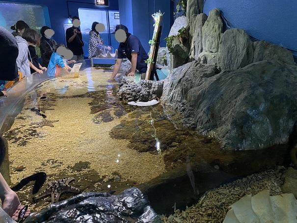 新屋島水族館 タッチプール