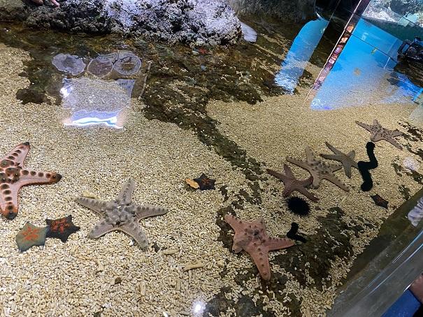 新屋島水族館 タッチプール2
