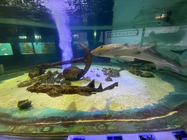 新屋島水族館 サメ水槽