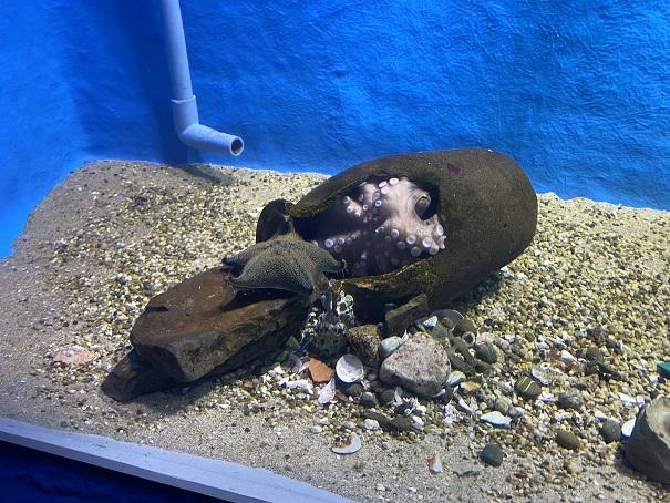 新屋島水族館 タコ
