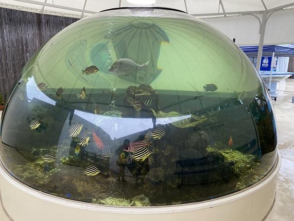 新屋島水族館 世界最大のドーム水槽