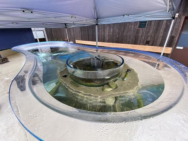新屋島水族館 ひょうたん型水槽