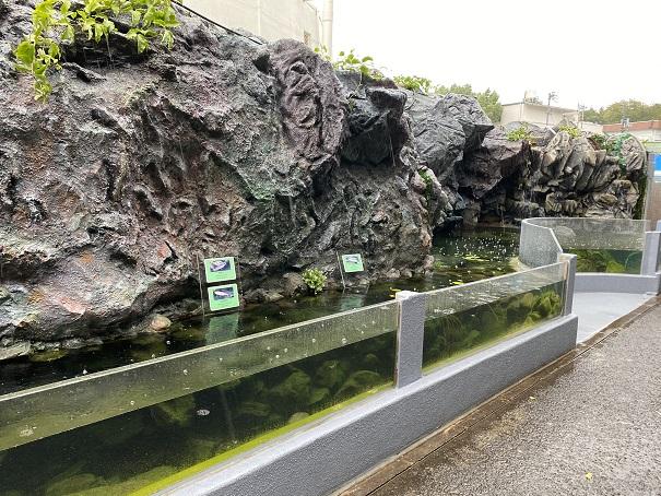 新屋島水族館 淡水魚コーナー