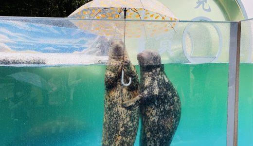 新屋島水族館 リニューアルで楽しさ倍増 傘さしアザラシショー 高松市
