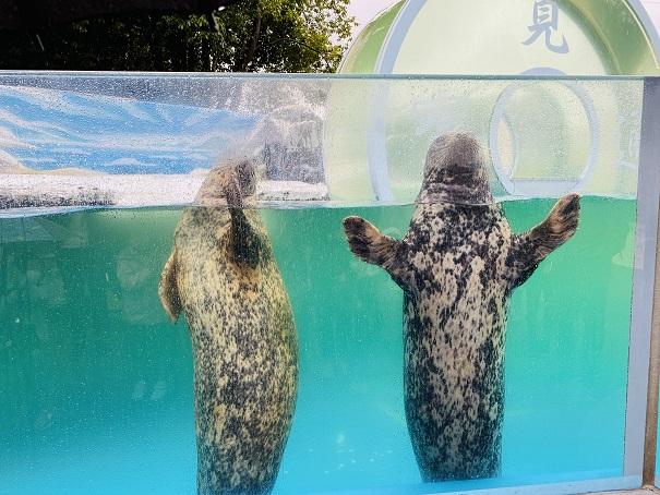 新屋島水族館 ゼニガタアザラシ
