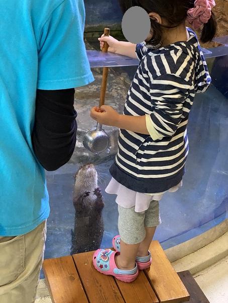 新屋島水族館 カワウソエサやり体験