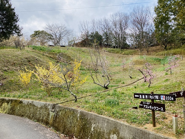 梅と水仙の谷
