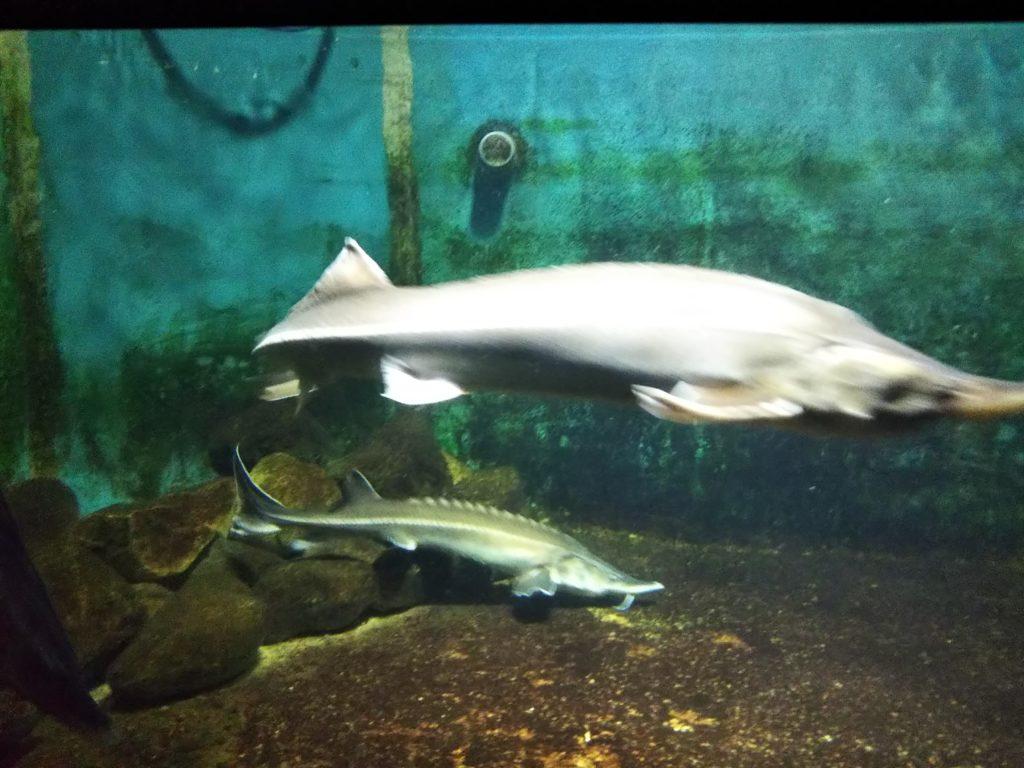 新屋島水族館の魚3