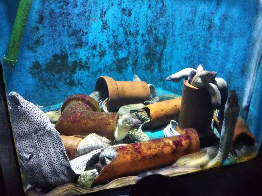 新屋島水族館の魚4