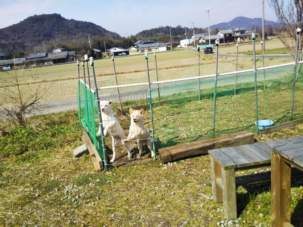 大山牧場犬