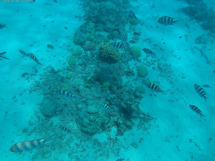 トロピカルな熱帯魚
