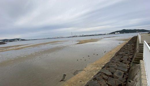 綾川の河口でマテ貝採りと潮干狩り 坂出市林田町
