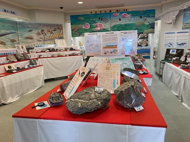 化石の展示雨滝自然科学館