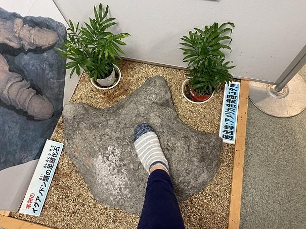 イグアノドン類の足跡の化石