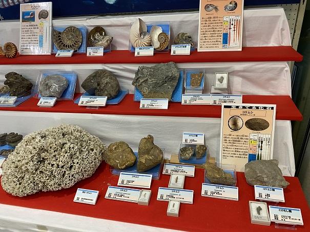 雨滝自然科学館サンゴの化石
