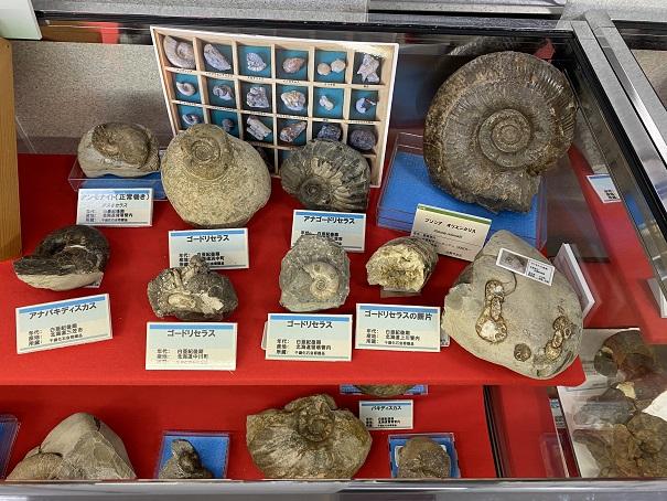 アンモナイトの化石雨滝自然科学館