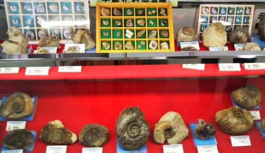 さぬき市の雨滝自然科学館で化石の発掘体験