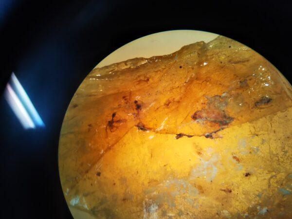 顕微鏡で見た琥珀