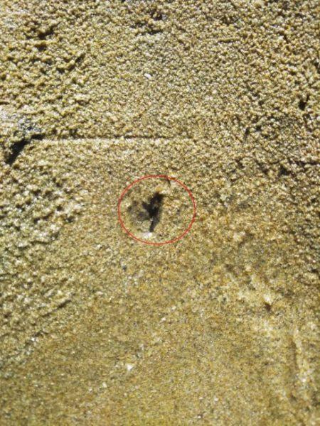 マテ貝の穴