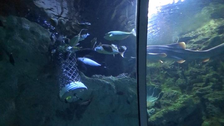 魚たちに餌をやっている場所