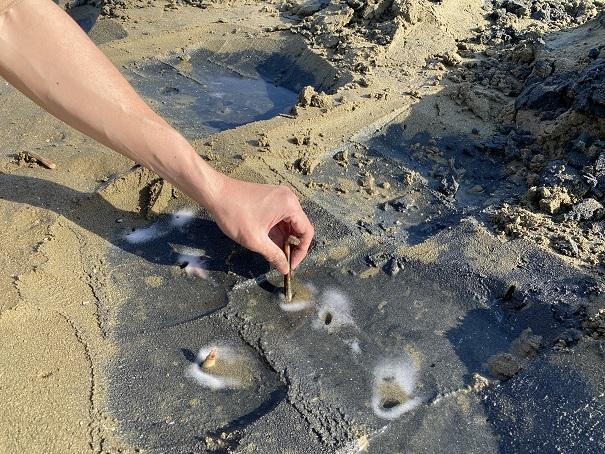 マテ貝をつかむ仁尾海岸