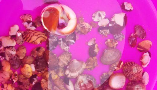 さぬき市鴨部川河口でマテ貝やアサリ取り 潮干狩り