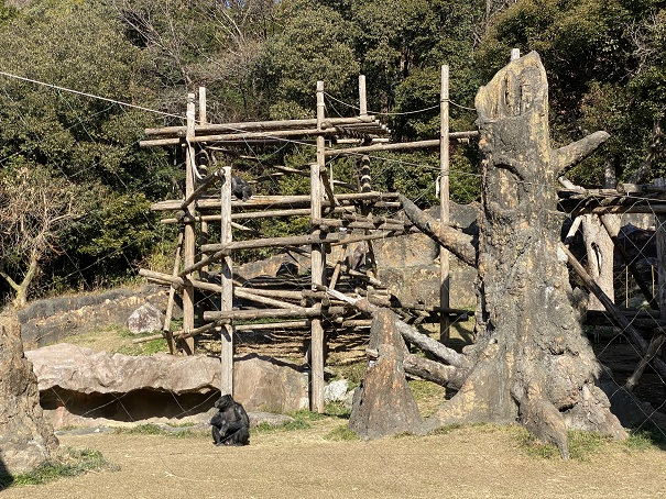 チンパンジーエリア