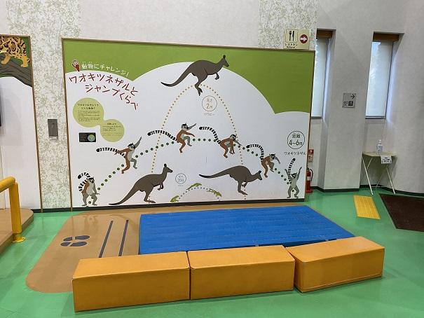 ワオキツネザルとジャンプ比べ